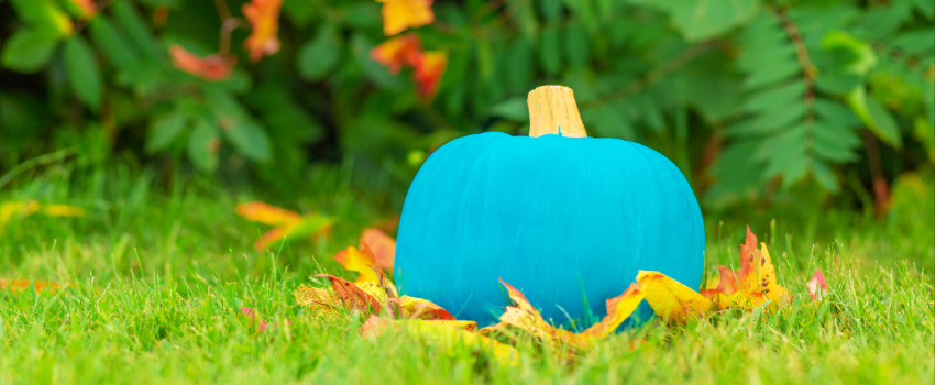 teal pumpkin on the ground